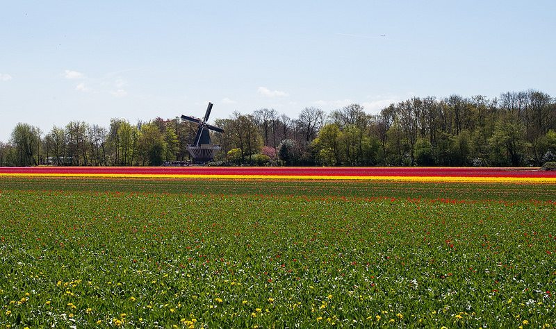 Flat land and fertile soil, together with favourable climatic conditions have helped the Dutch agriculture industry to grow.