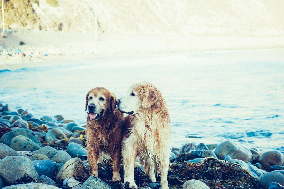 Now you can communicate with your pet with the animal-to-speech