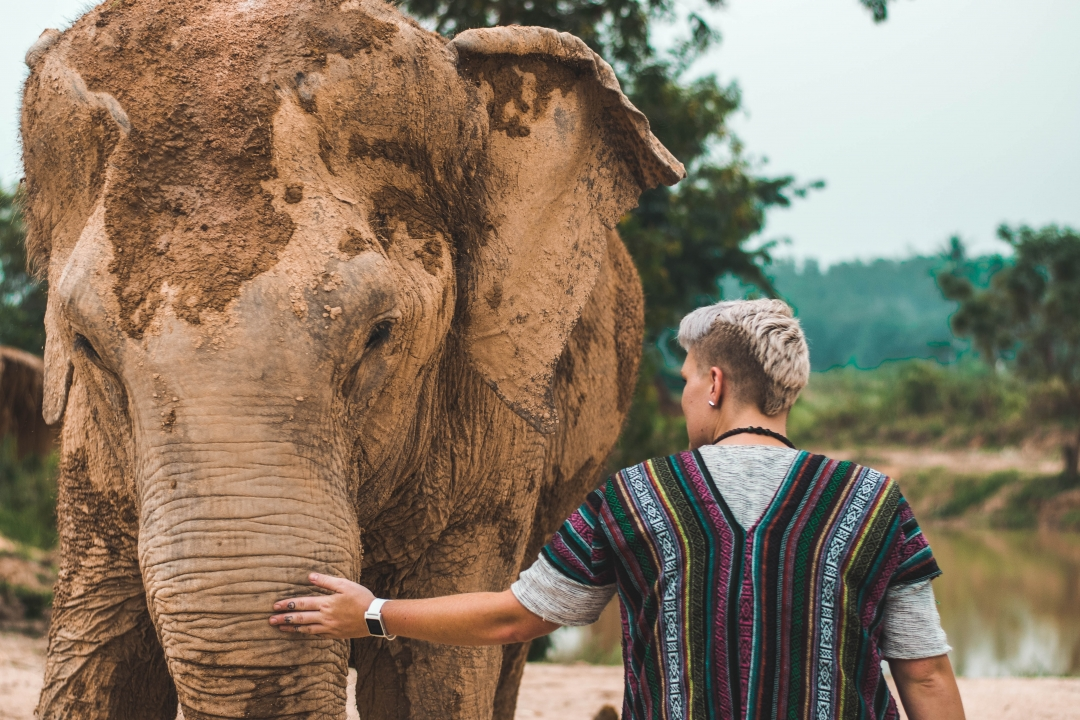 Do Wild Animals Benefit From Human Interaction